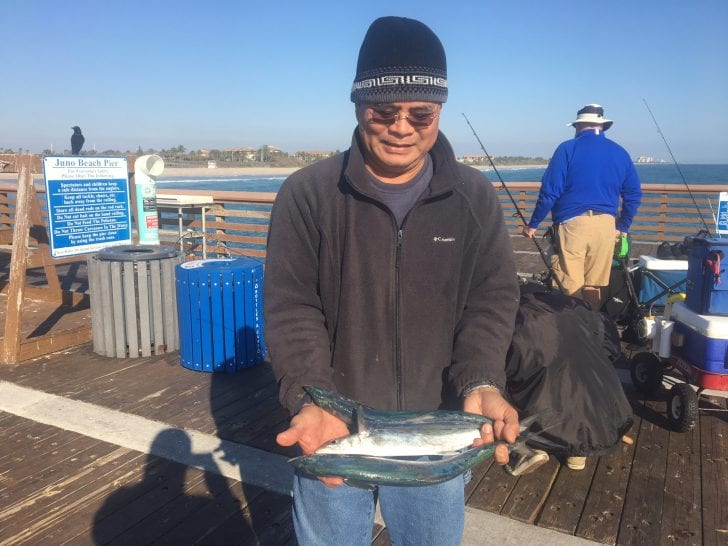Spanish Mackerel Caught On The Juno Beach Pier Photo Courtesy Of