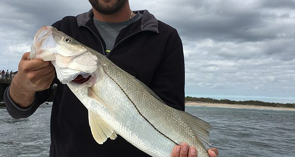 Snook are just one of the species available near the jetty this month.