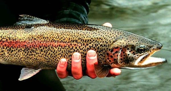 Cherokee Secret: Soco Creek | Coastal Angler & The Angler