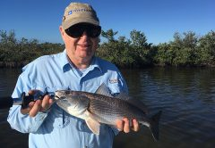 Sheepshead are holding on docks, rocky areas and mangrove roots this month in the Banana River Lagoon.