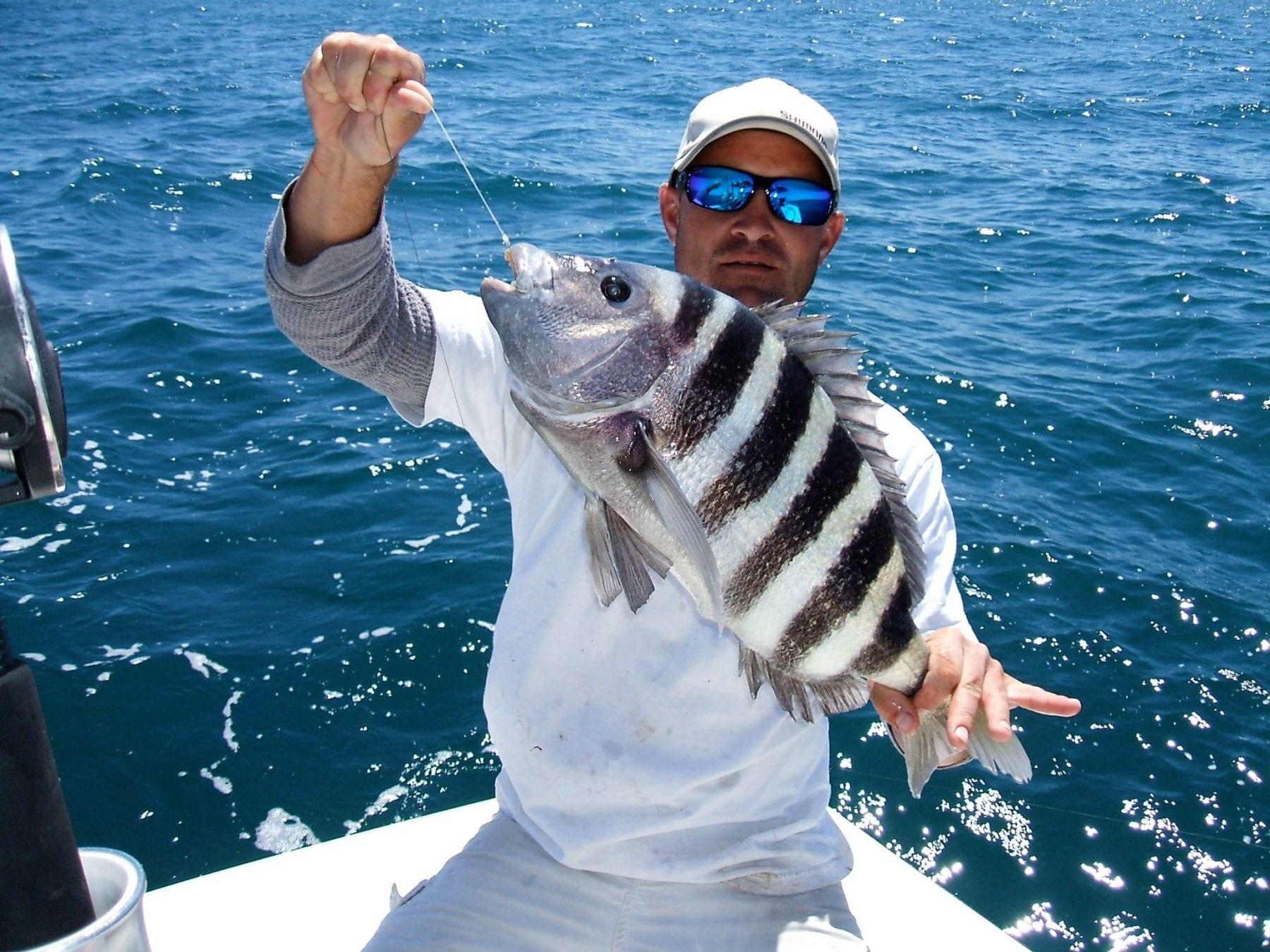 Sheepshead feeding frenzy coastal angler the angler for Northeast saltwater fishing reports