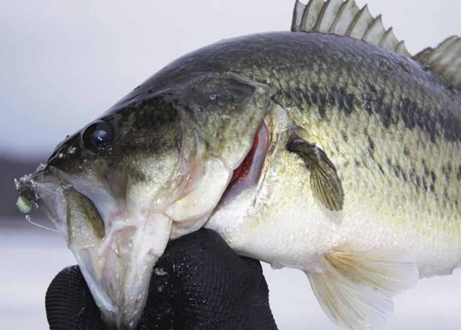Keep moving for better ice fishing coastal angler the for Ice fishing for bass