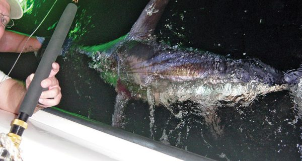 Hydroglow light and swordfish.