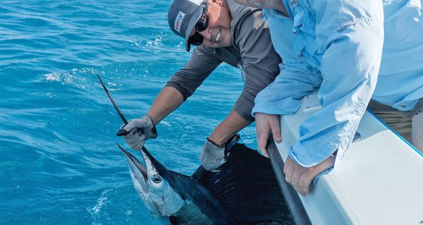 Catch and release sailfish with Capt. Orly.
