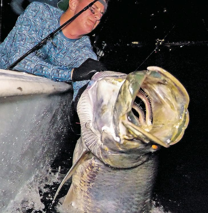 Big tarpon caught and released with Tell 'N Tails Charters.