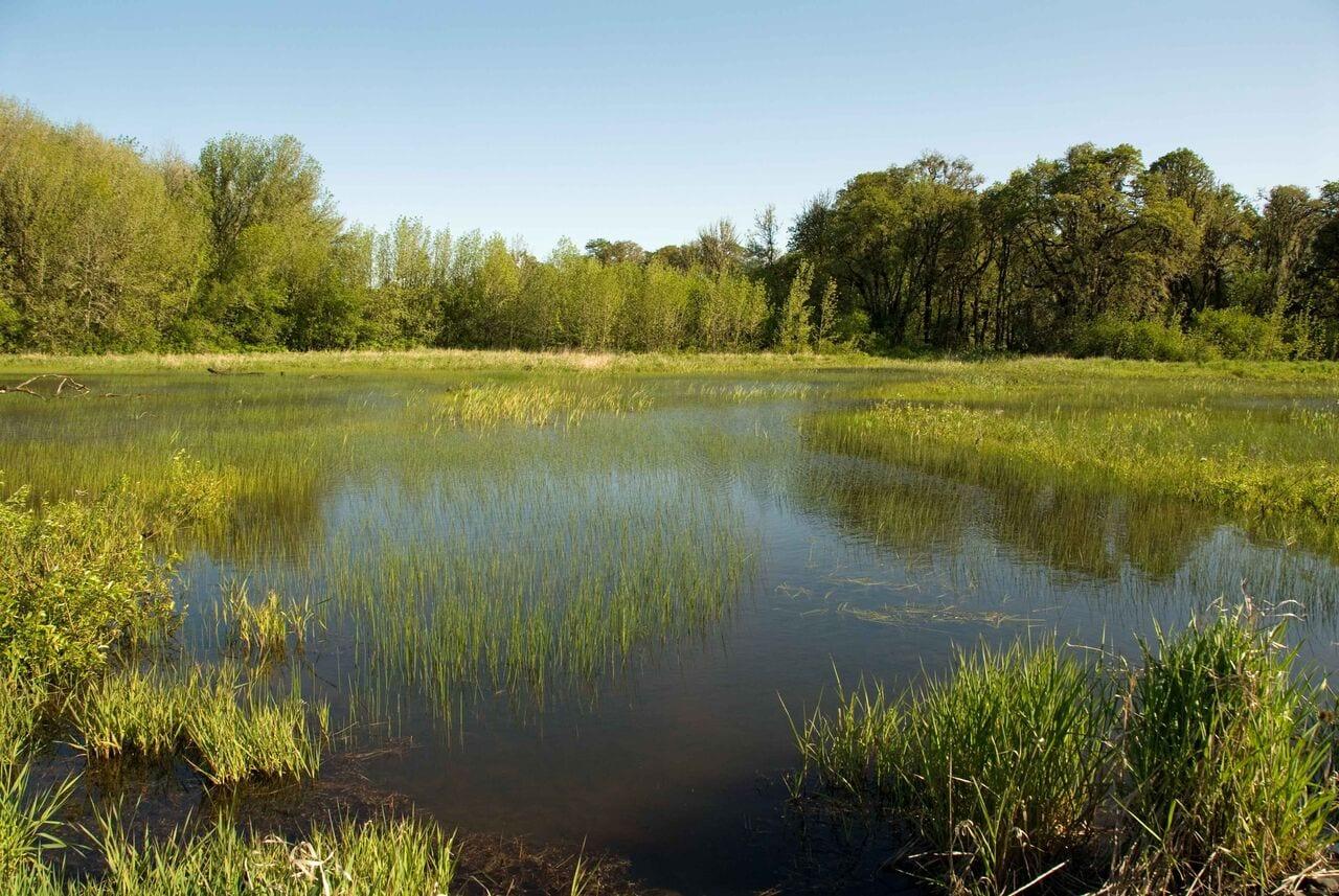 2018 April Fl Waterways 2 Green Swamp In Fl In Public