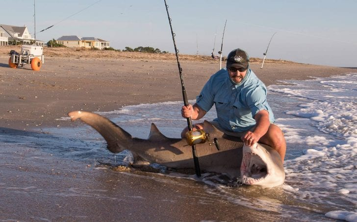 Shark fishing in the lowcountry coastal angler the for Shark fishing from shore
