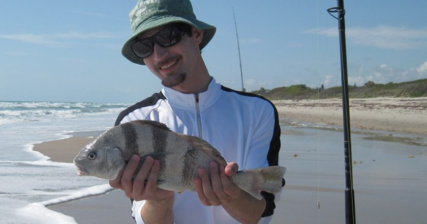 Angler admires his 18 inch keeper black drum caught in the surf on a pompano rig and clam.