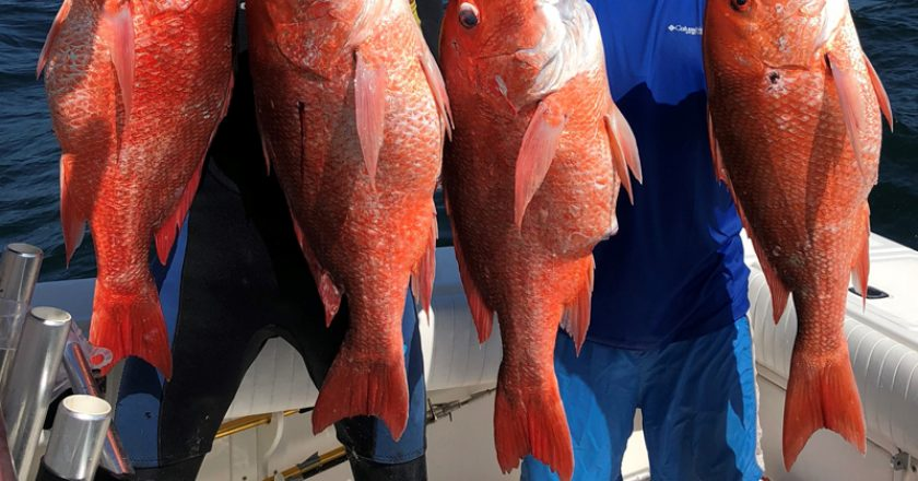 Dr. John Brown and Dr. Tom Roberts picked off some amazing red snapper while spearfishing in 130 ft water off Orange Beach, AL.