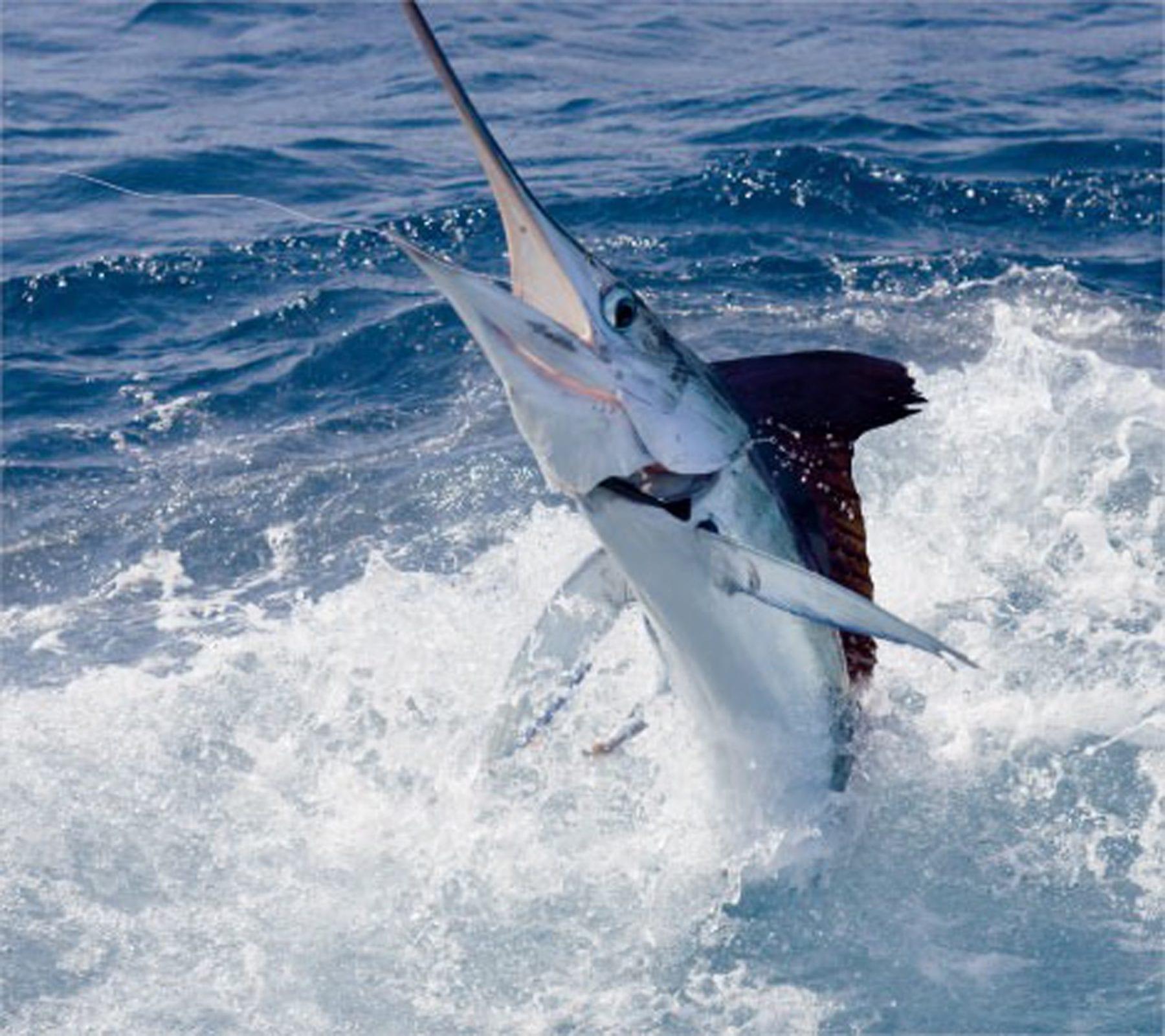 Spearfishing Andros Island, Bahamas | Coastal Angler & The