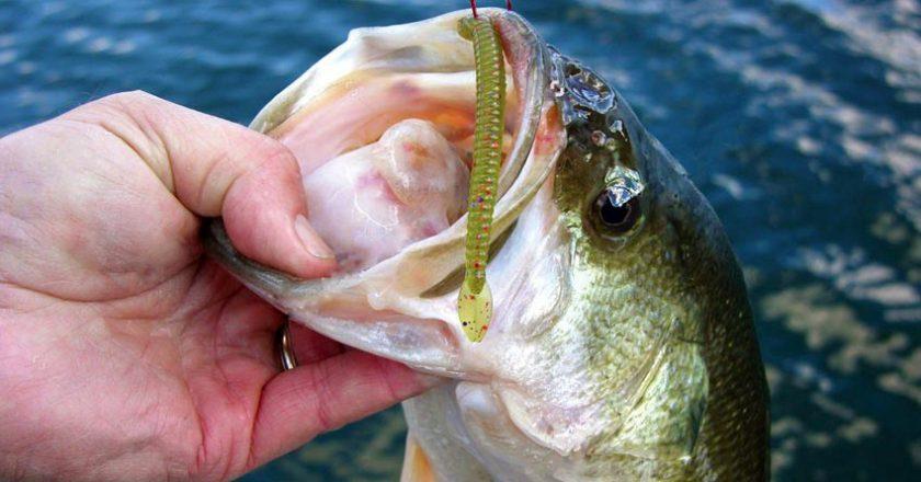 fishing science