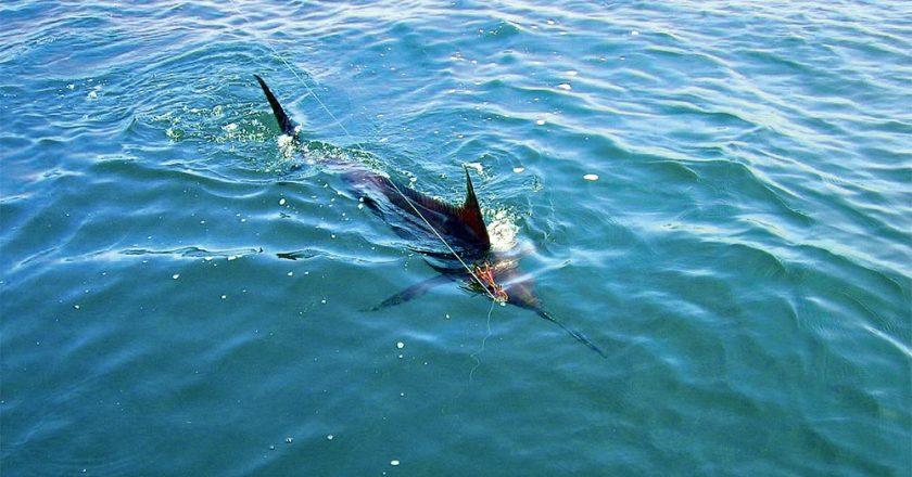 Great Marlin Race