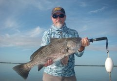 Rober enjoyed a morning of sight-fishing Mosquito Lagoon black drum and proved drum can be caught on lures. This drum and others ate a Z-Man Diezel Minnowz on a recent trip with Capt. Mark Wright.