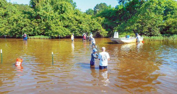Vegetation Enhancement On Lake Gaston Continues