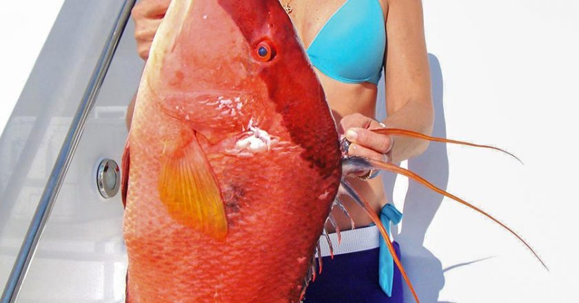 hogfish spearfishing