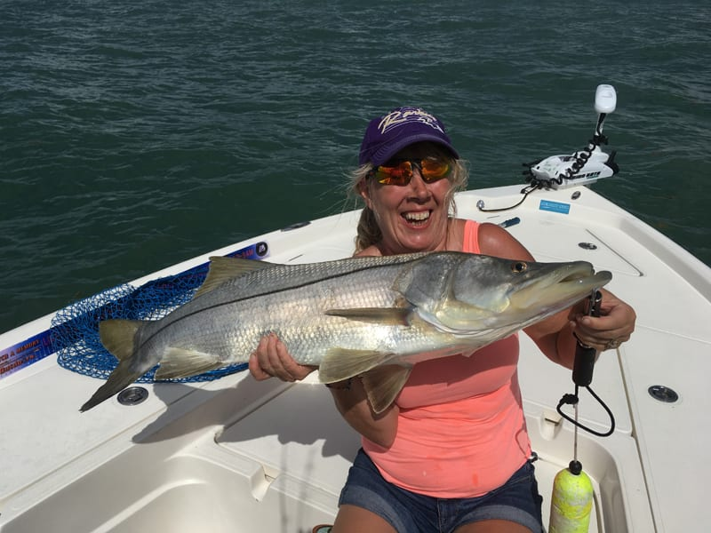 Snook are in season.  These fish will be feeding aggressively this month along the beaches outside of Port Canaveral.