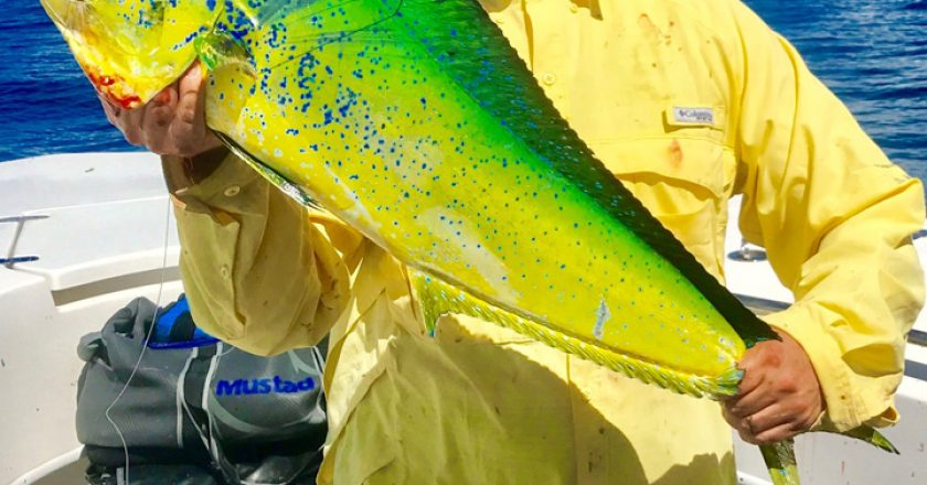 Billy West shows off a beautiful Mahi-Mahi caught off the elbow.