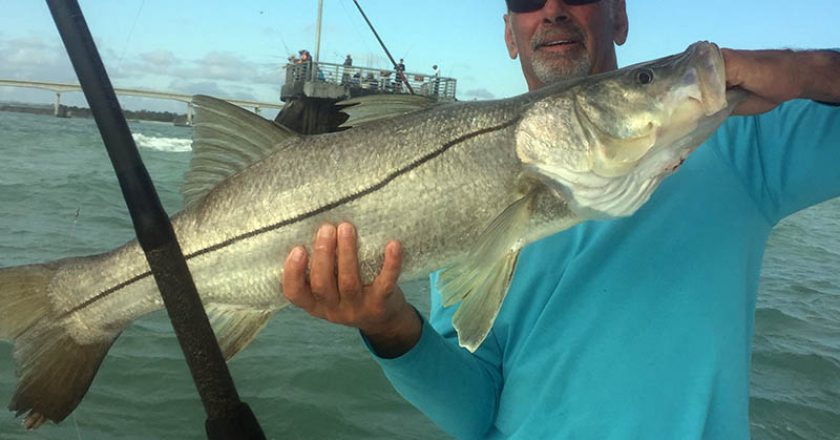 Fort Pierce inshore snook