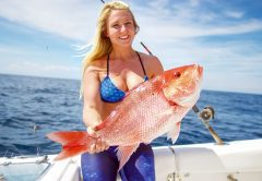 Red Snapper Limit and Other Methods to Extend Atlantic Snapper Season