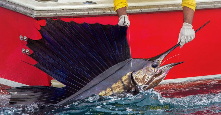 billfish conservation