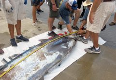 Mississippi Gulf Coast Billfish Classic Raises the Blue Marlin Length