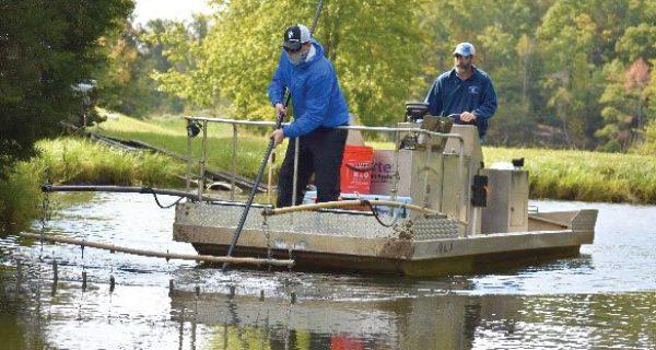 electrofishing survey