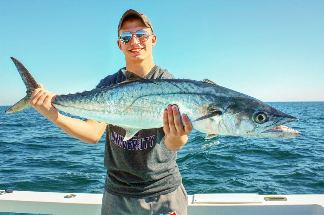 Follow The Fall King Mackerel Migrations