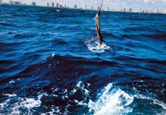 NOAA Fisheries Denies Longline Permit in Florida Closed Zone