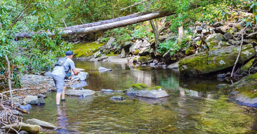 Delayed Harvest Trout Waters Open