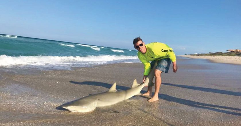 FWC Mulling New Regs For Land-Based Shark Fishing
