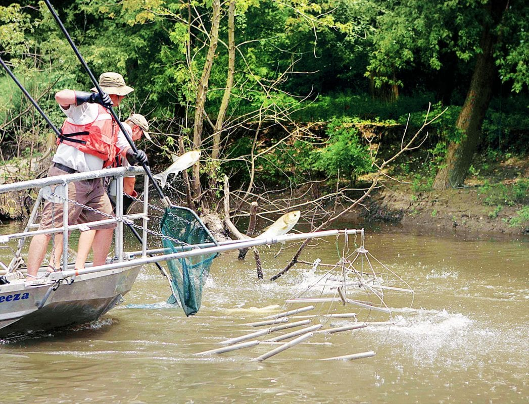 Asian Carp Deterrent To Be Tested At Kentucky's Barkley Dam