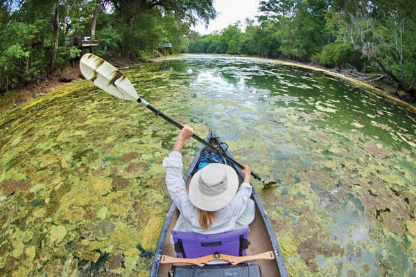 Algae Blooms in Florida: Step Forward for Water Quality