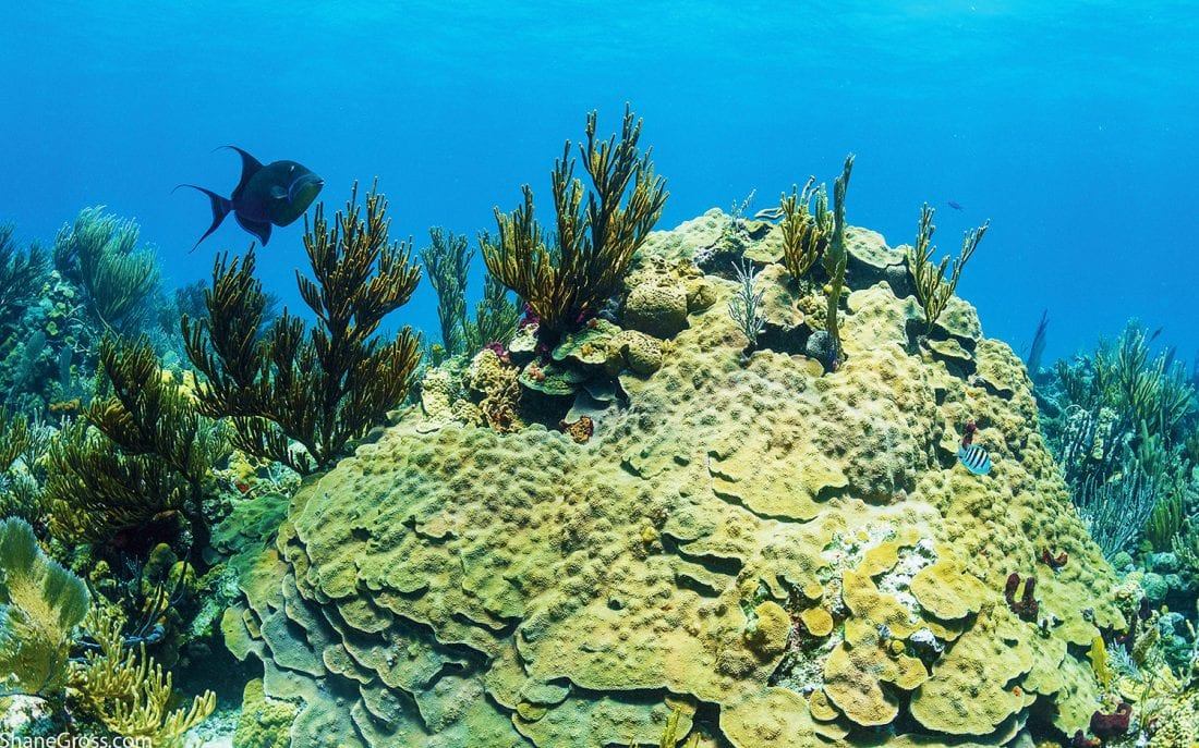 Exuma Cays Land and Sea Park Wins Global Ocean Refuge Award