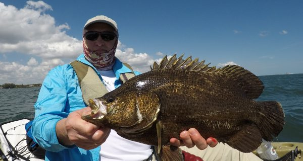 Nice Indian River tripletail