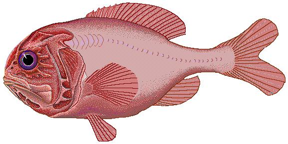 "Florida Waterways: ""Funny Fish Names""   Coastal Angler & The Angler"