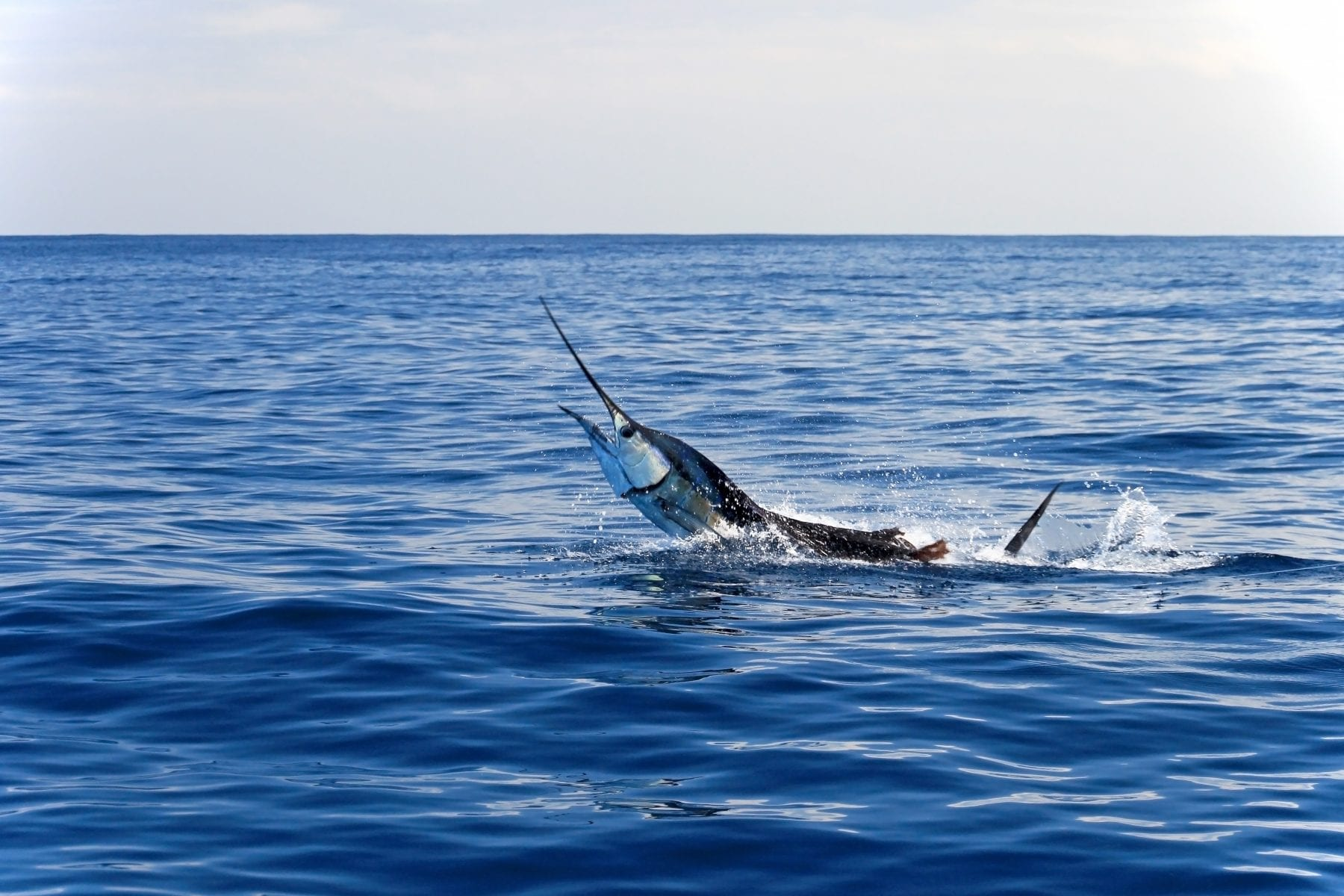 Double Duty | Coastal Angler & The Angler Magazine