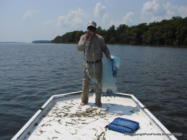 St. Johns Fishing Report